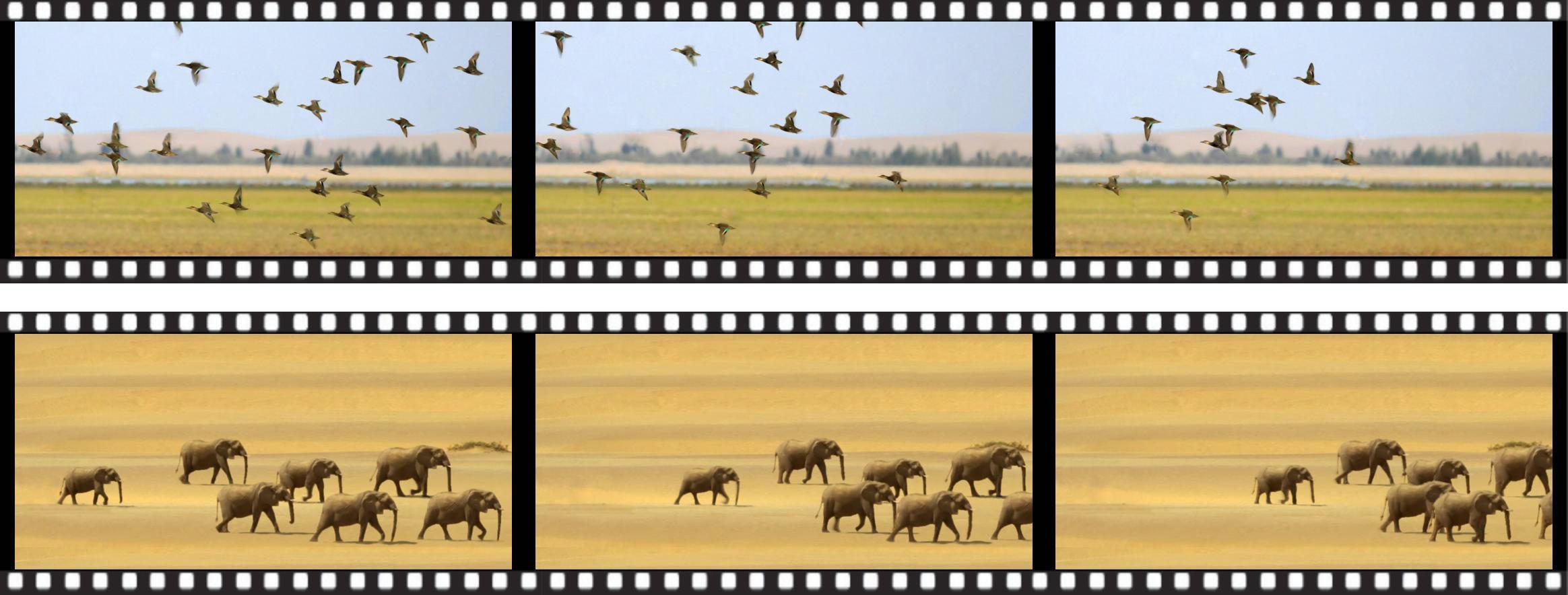 憑單一照片製作出的動畫 (片段可於網頁http://www.cse.cuhk.edu.hk/~ttwong/papers/flock/flock.html下載)