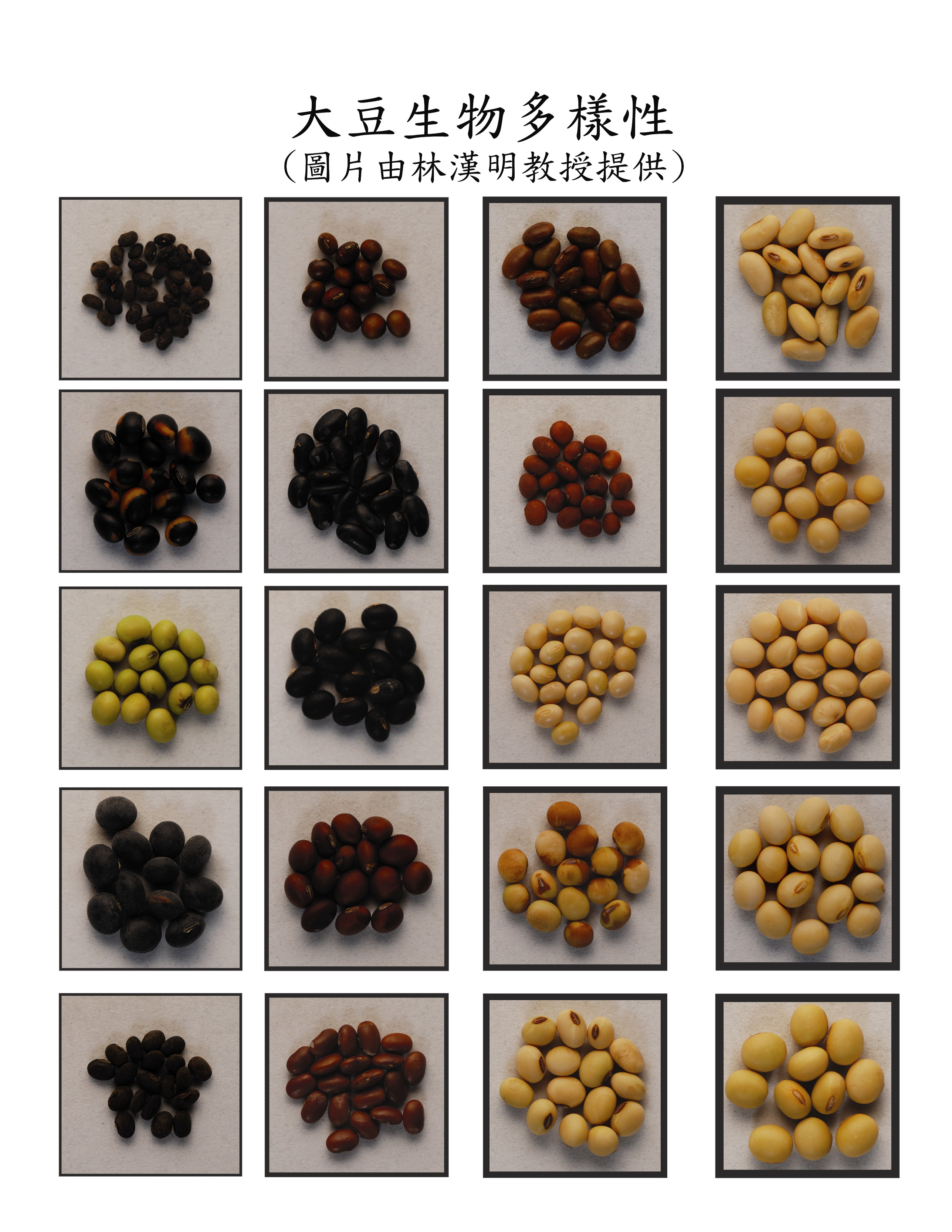 Biodiversity of soybean