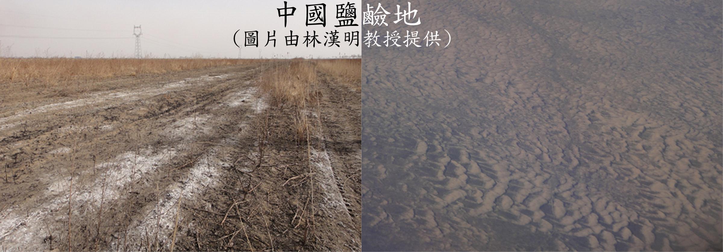 Saline lands in Northern China