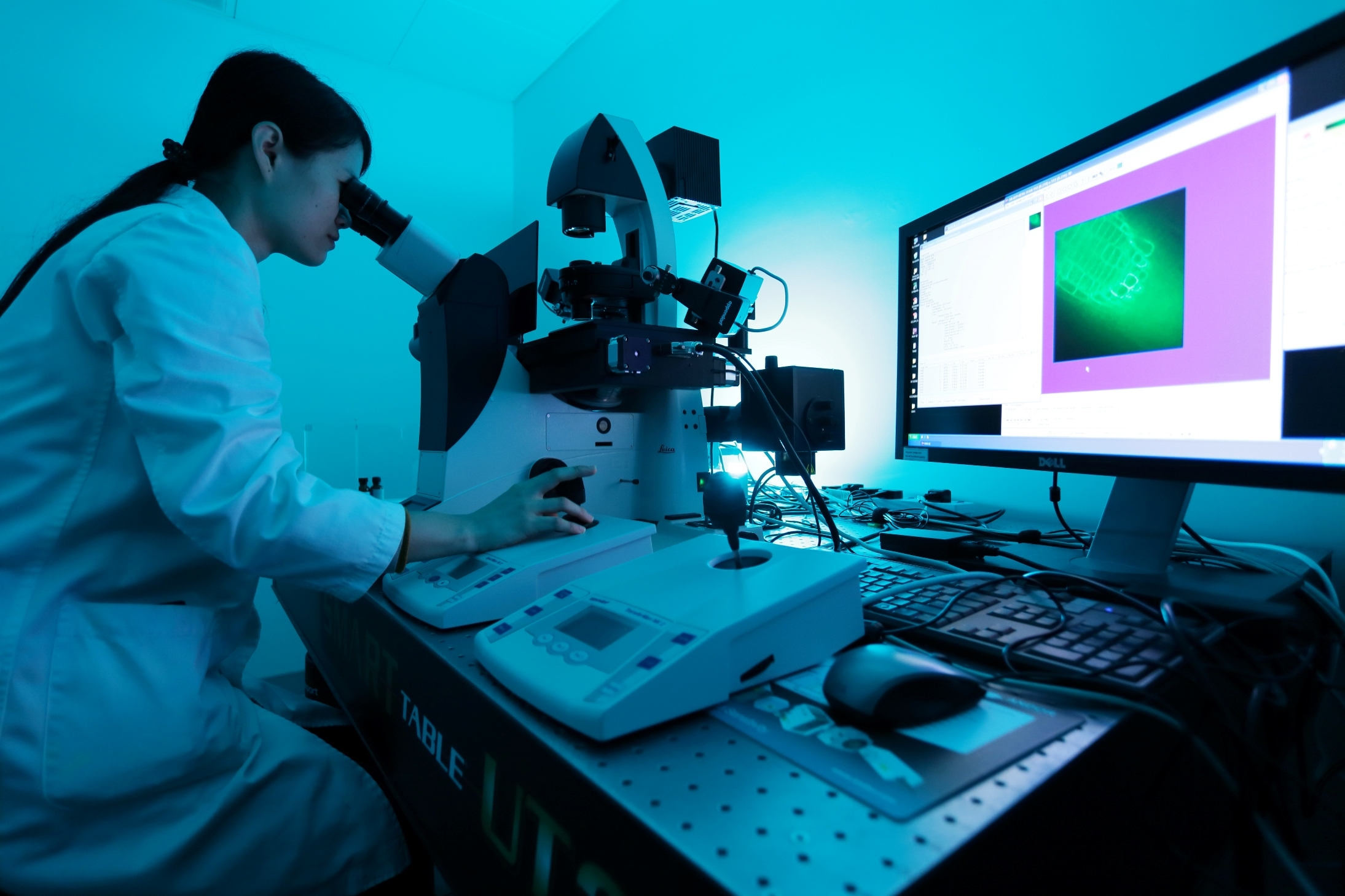 Researcher viewing plant cell action through a spinning disk confocal microscope (Photo by Keith Hiro)