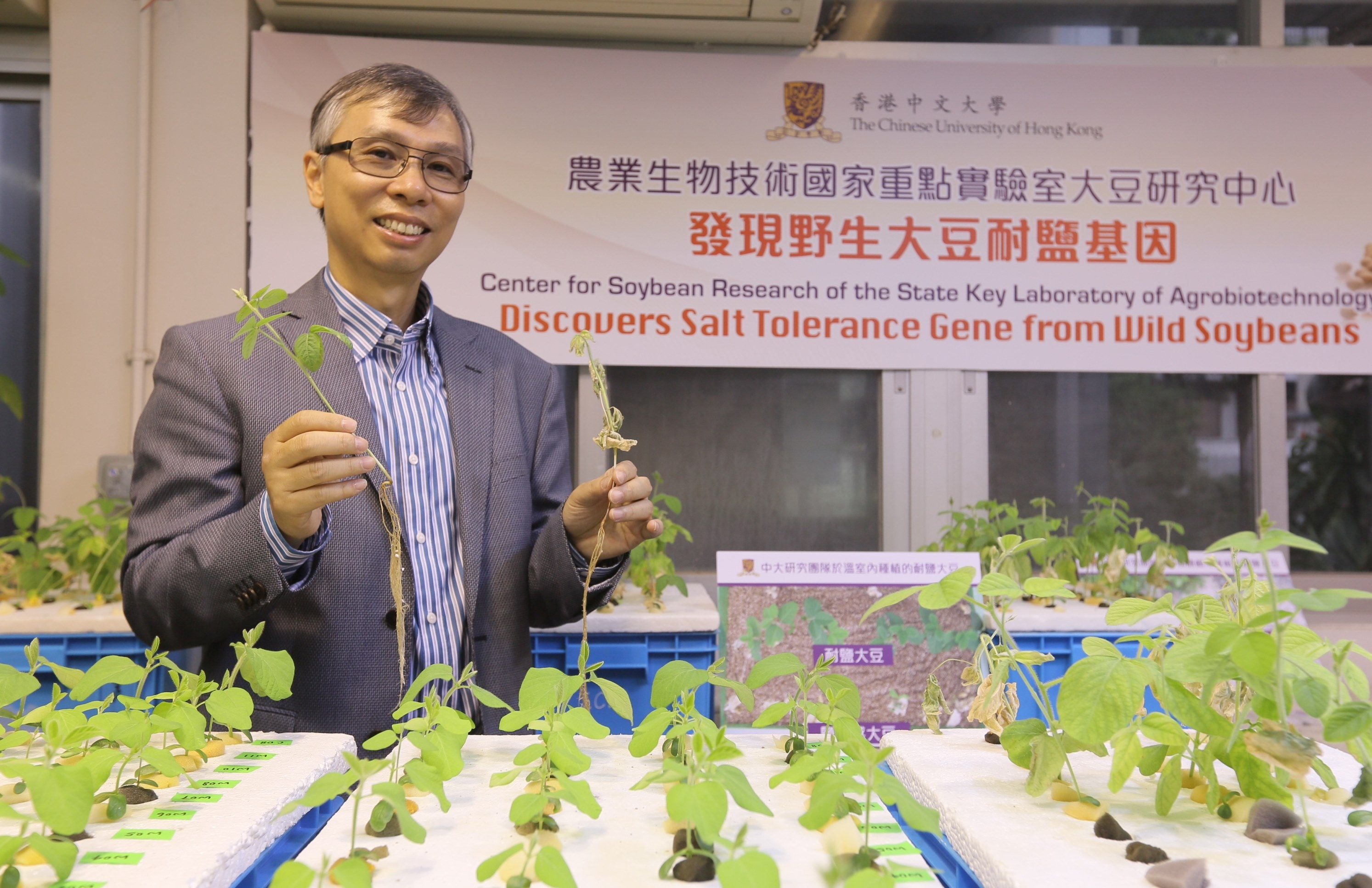 Prof. Lam Hon-ming shows the difference of salt tolerant soybean and salt sensitive soybean.