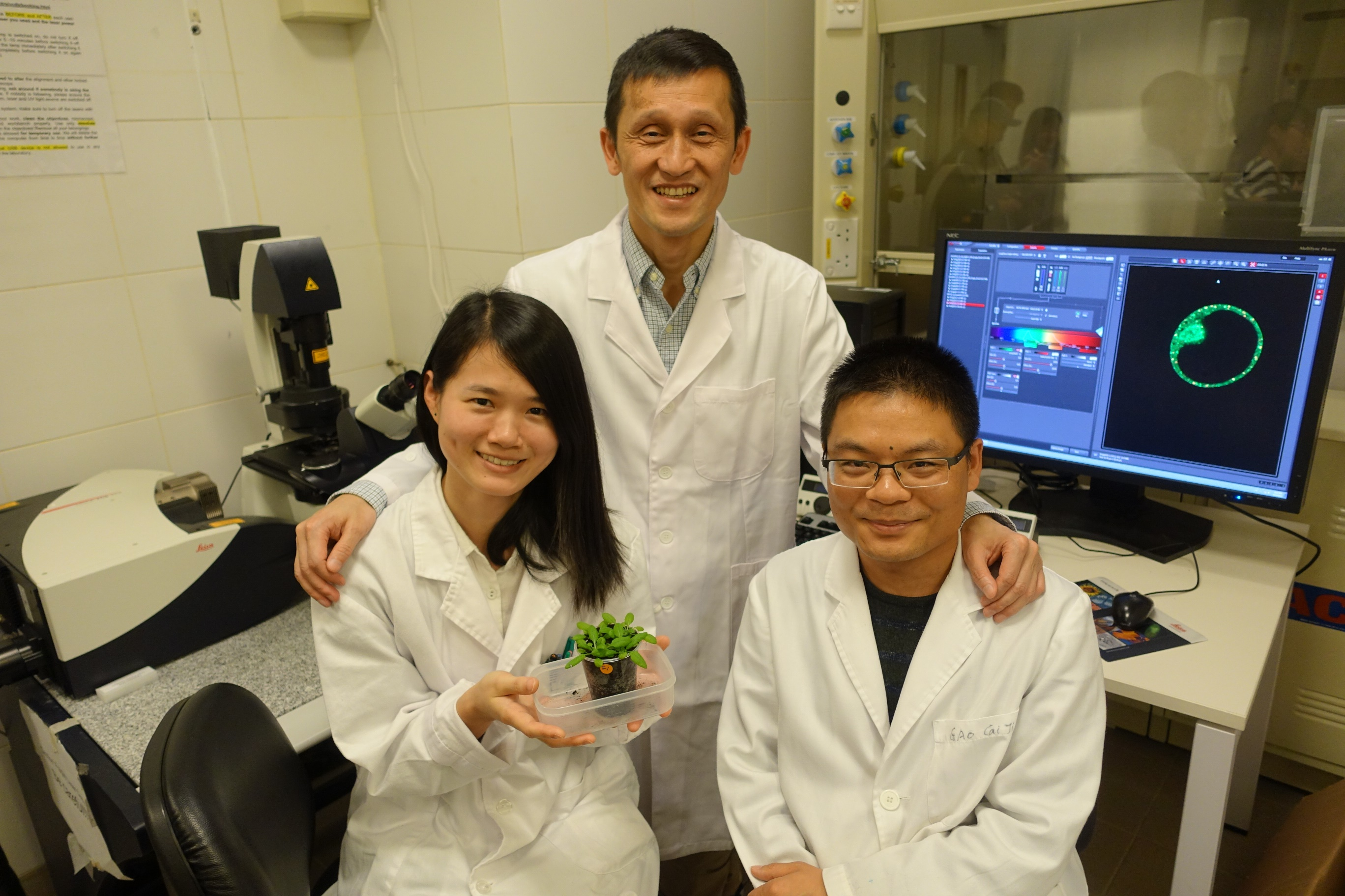 Professor Jiang's research team has been working on the underlying mechanisms of protein transport, organelle biogenesis and function in plants.