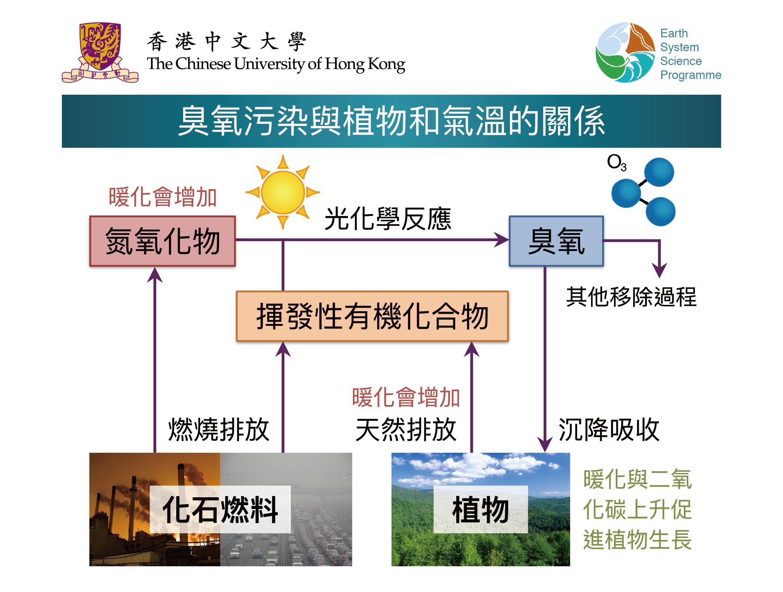 臭氧污染與植物和氣溫的關係