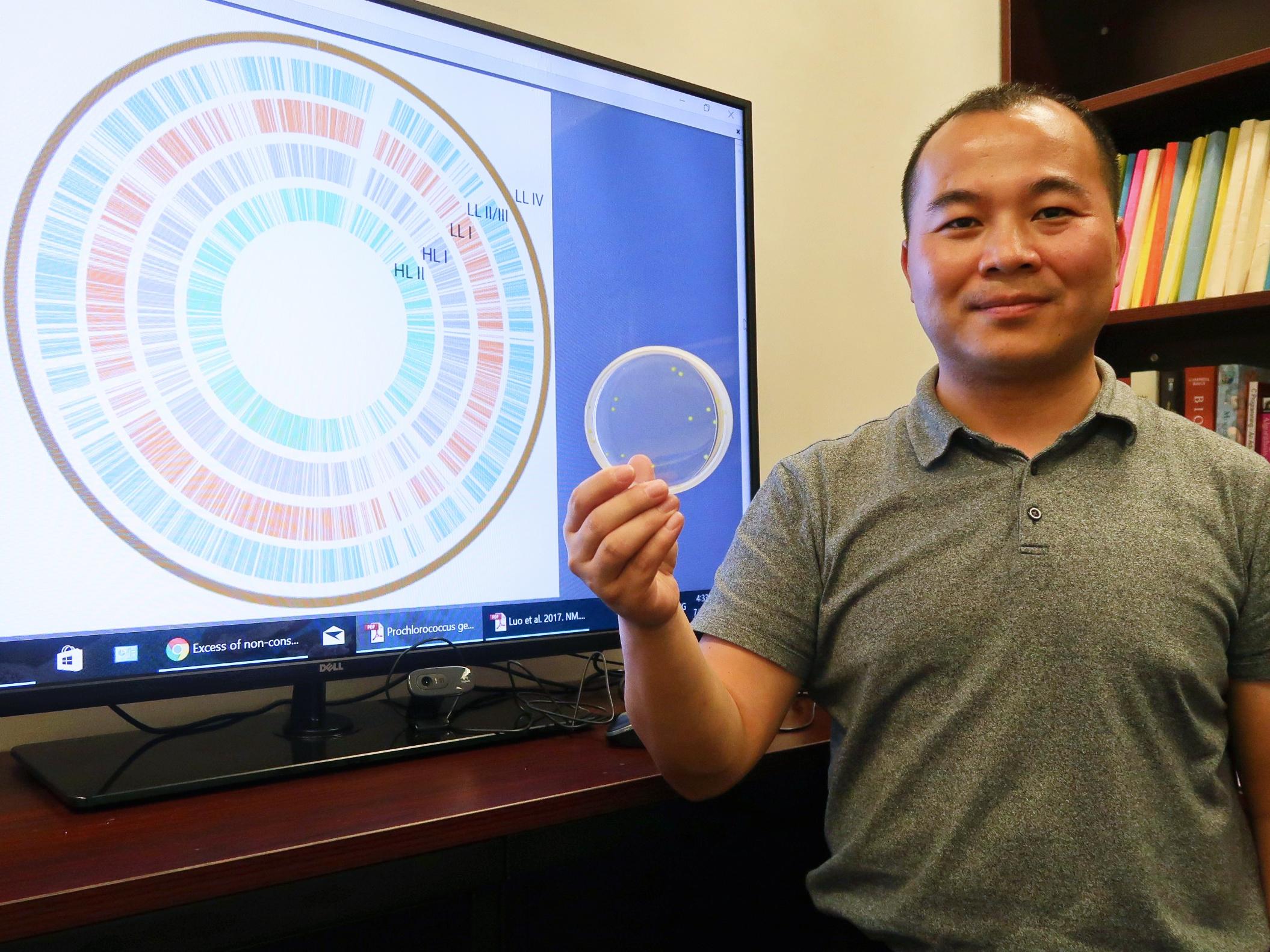羅海偉教授利用超級電腦分析原綠球藻的基因組DNA序列,重構它們的進化史。