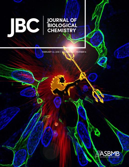 JBC封面故事:AQAMAN比喻為一個打破細胞內有毒蛋白質聚合體的英雄。