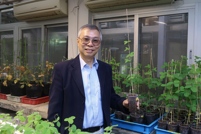 農業生物技術國家重點實驗室(香港中文大學)主任及中大生命科學學院教授林漢明教授