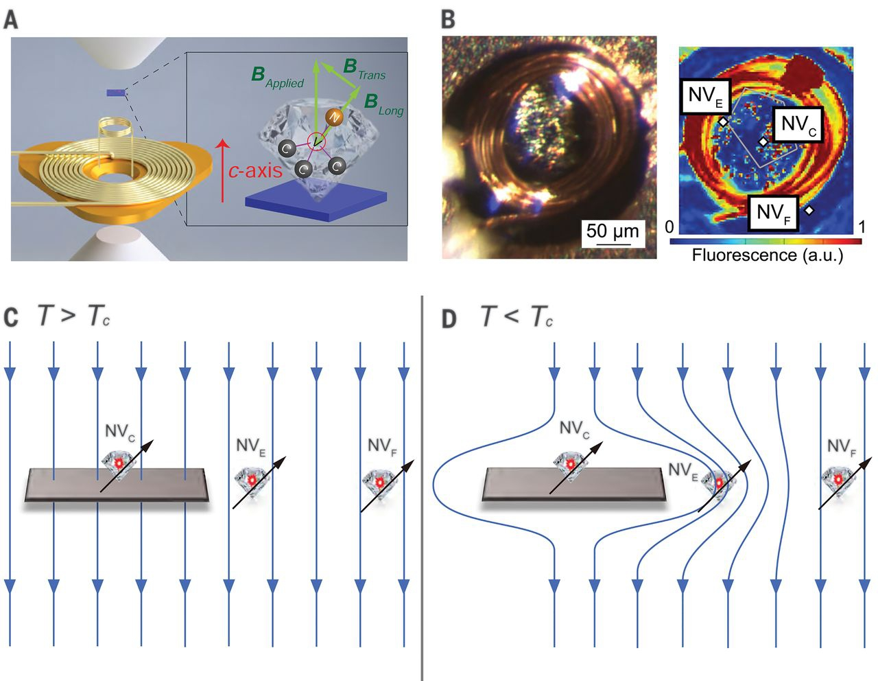 Schematic illustration of experimental configurations and detection concepts. (A) An exploded view of the pressure cell design. The sample (blue) is located in the high-pressure chamber together with a collection of diamond particles. Each diamond particle is a sensitive local field sensor.  (B) (Left) Photograph of the microcoil with sample on top of the anvil. (Right) Fluorescence image from the confocal scan showing the microcoil and NV centers.