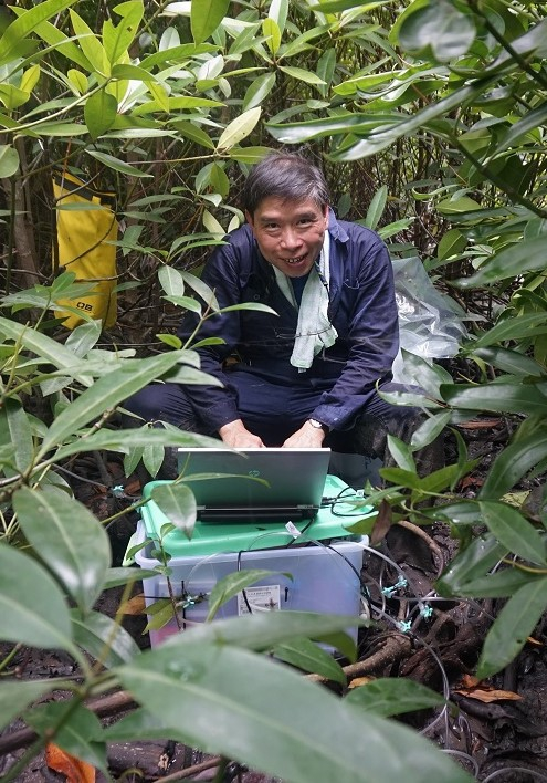 Prof. Lee measures sediment CO2 flux in a mangrove plantation in Malaysia.