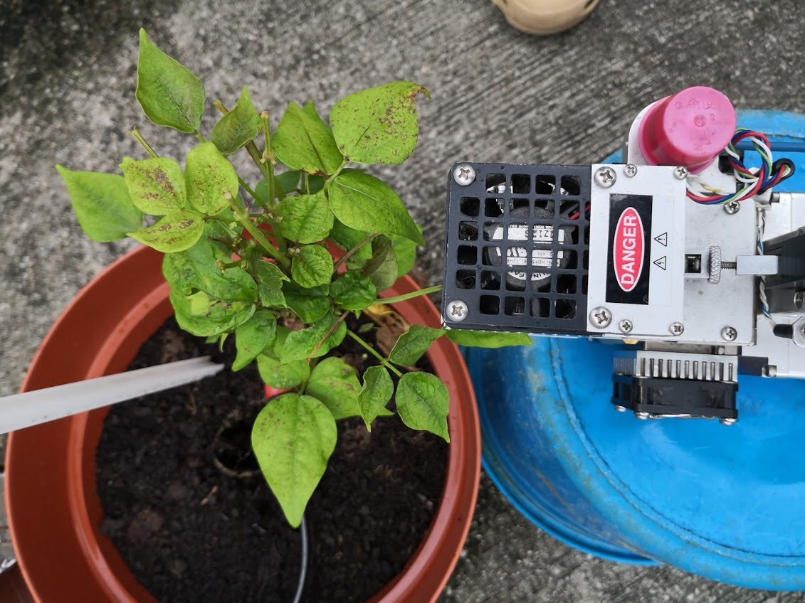 A Li-cor photosynthesis system was used to measure the photosynthetic rate of the plant.