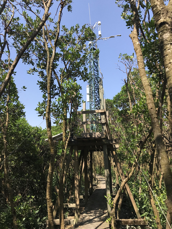設於米埔沼澤的渦度相關系統,無間斷監測整片紅樹林區域和大氣間二氧化碳和甲烷的交換量。
