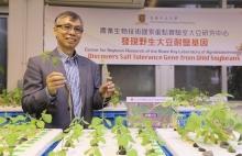 林汉明教授展示耐盐大豆(左)及盐敏感大豆的分别。