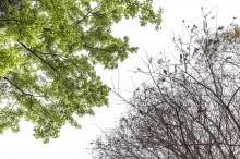 「生态行摄影比赛2017」公开组冠军作品「冬去春来」