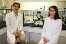 中大生命科學學院關健明教授(左)及呂雅珠為小腦萎縮症的分子病理學提供嶄新的研究方向。