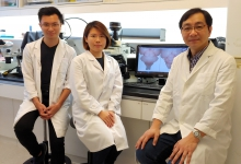Professor Kwan (right) and his research team unveils the mechanism of neural progenitor competence regulation