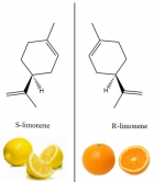 """Image 1: Many compounds are naturally chiral and different in the left/right symmetry. For instance, a """"left"""" compound S-limonene smells like lemons, whereas its """"right"""" counterpart R-limonene smells like oranges."""
