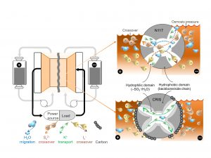 Diagram of a polysulfide-iodide redox flow battery. CRIS membrane repels the crossover of active materials themselves which dramatically improve the stability and lifetime of batteries, while the commercial membrane is challenged by the crossover of active materials which accelerates the capacity decay of battery.
